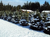 snow scene 1350867483