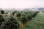 trees1a 1413237393